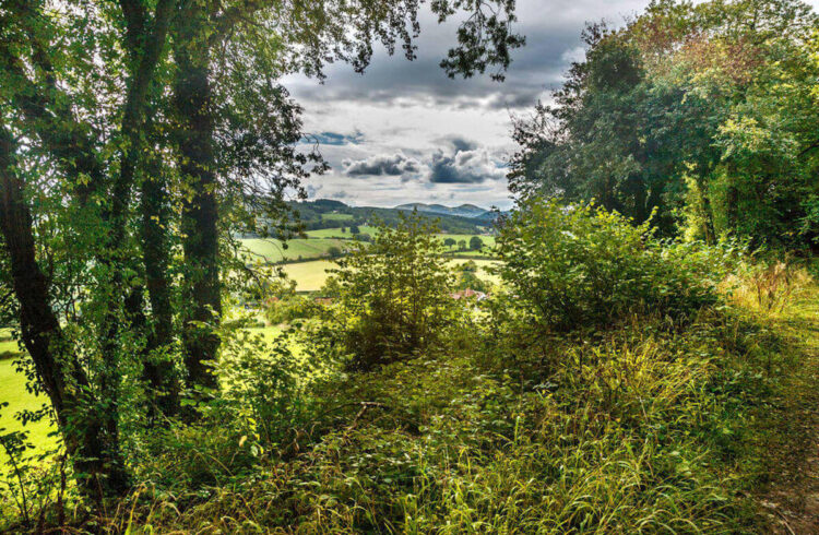 View from Blackhouse Wood. Photo credit: Paul Lane