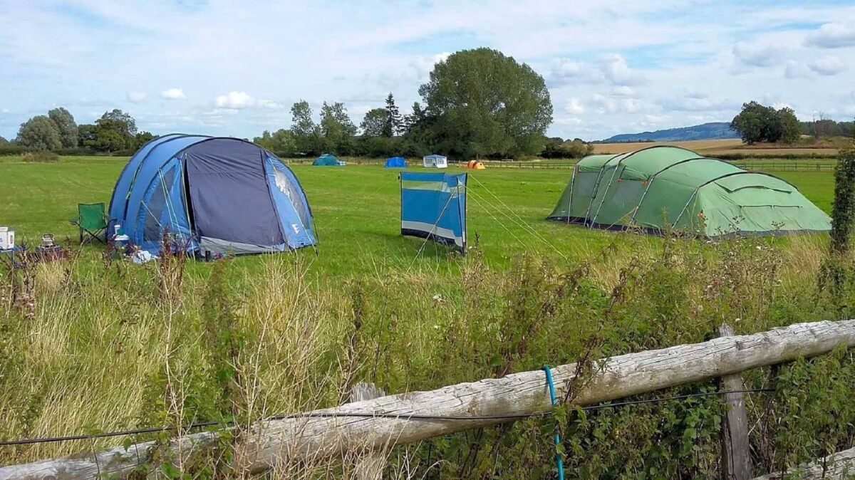 Bluebell Camping 3