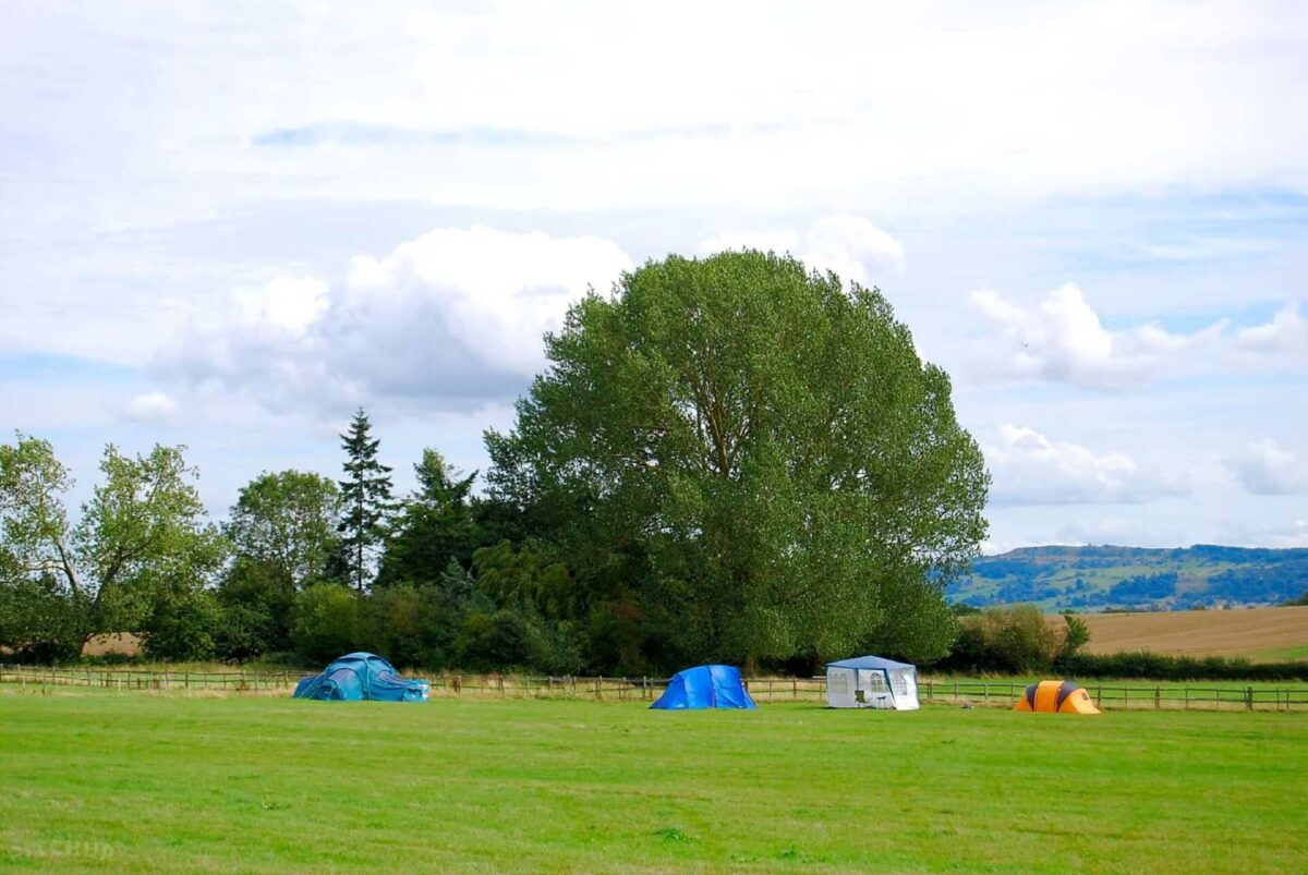 Bluebell Camping 4