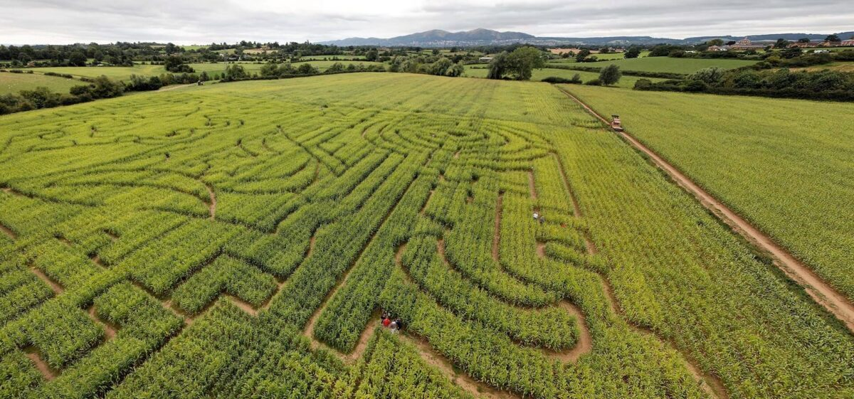 Great Worcester Maize Maze 1