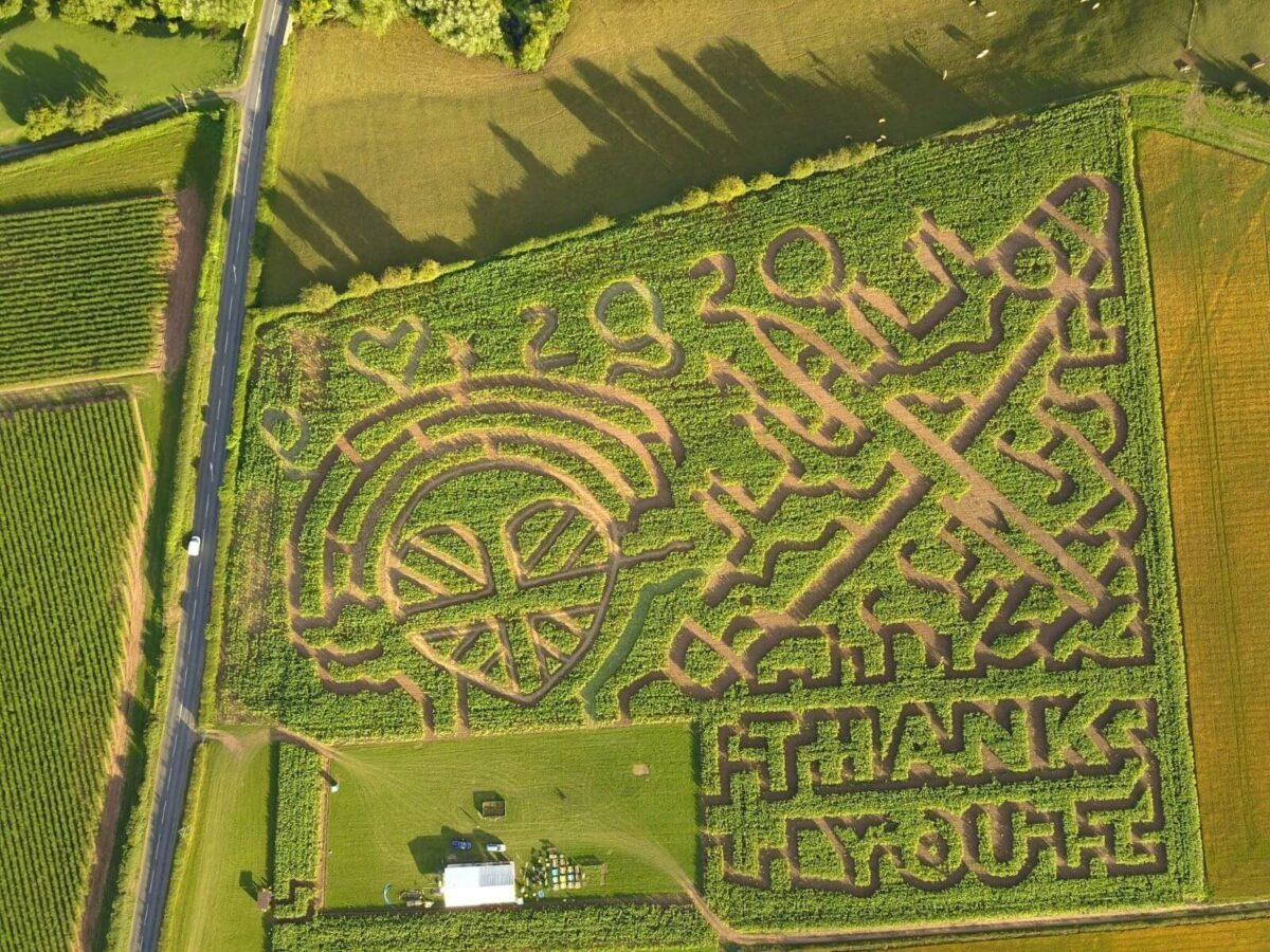 Great Worcester Maize Maze 4