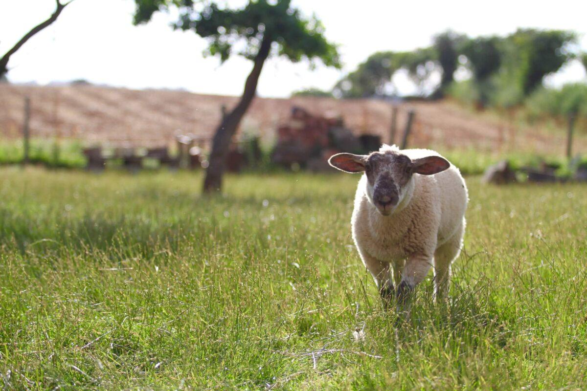 Huntlands Farm 5