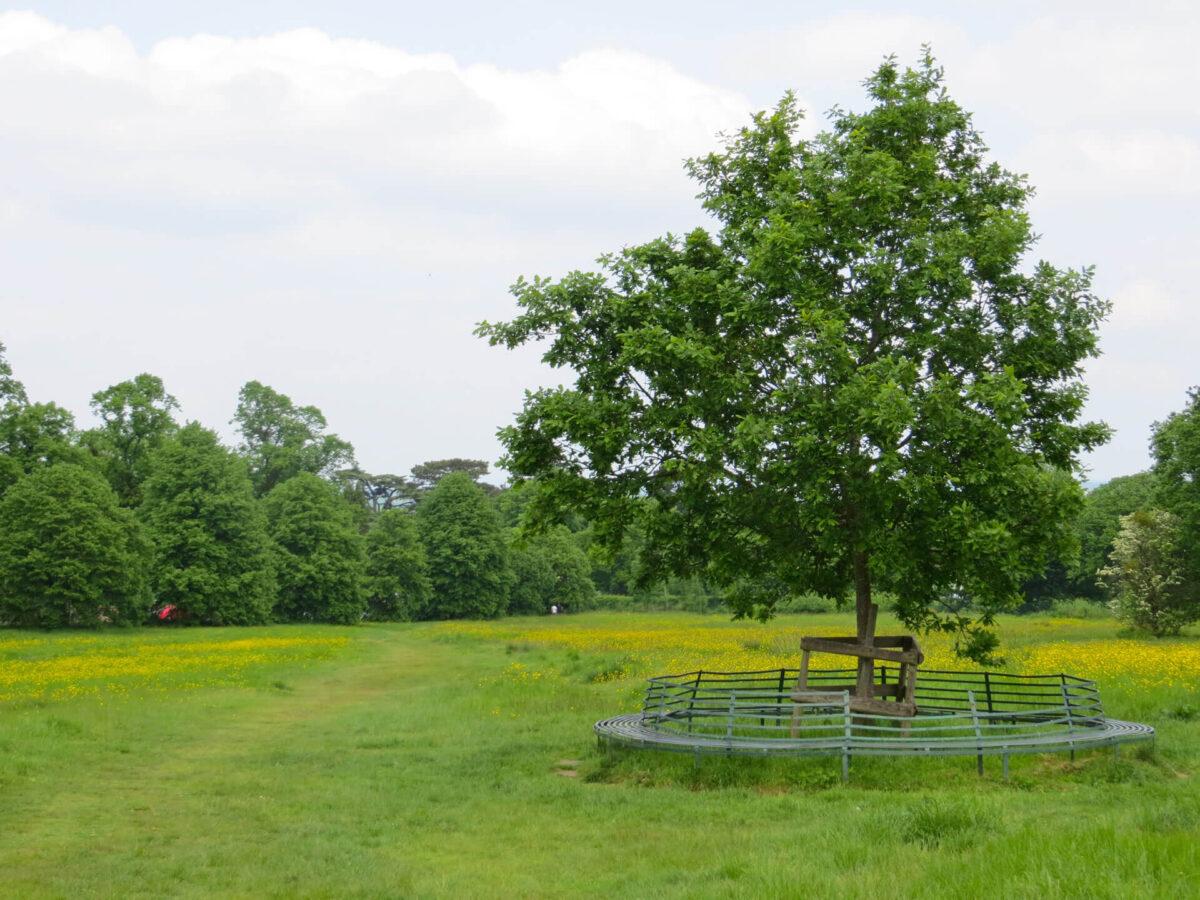 Link Comon Tree