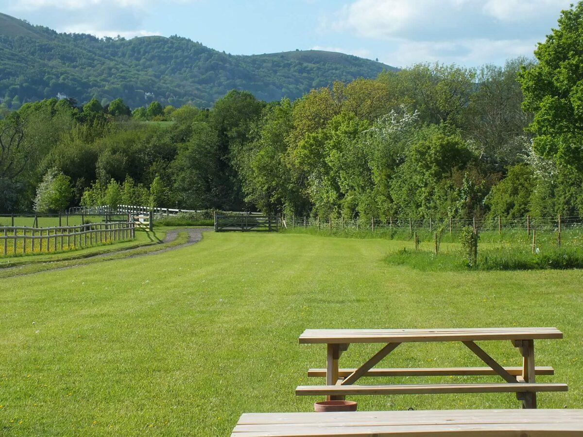 Rosebud Meadow 2