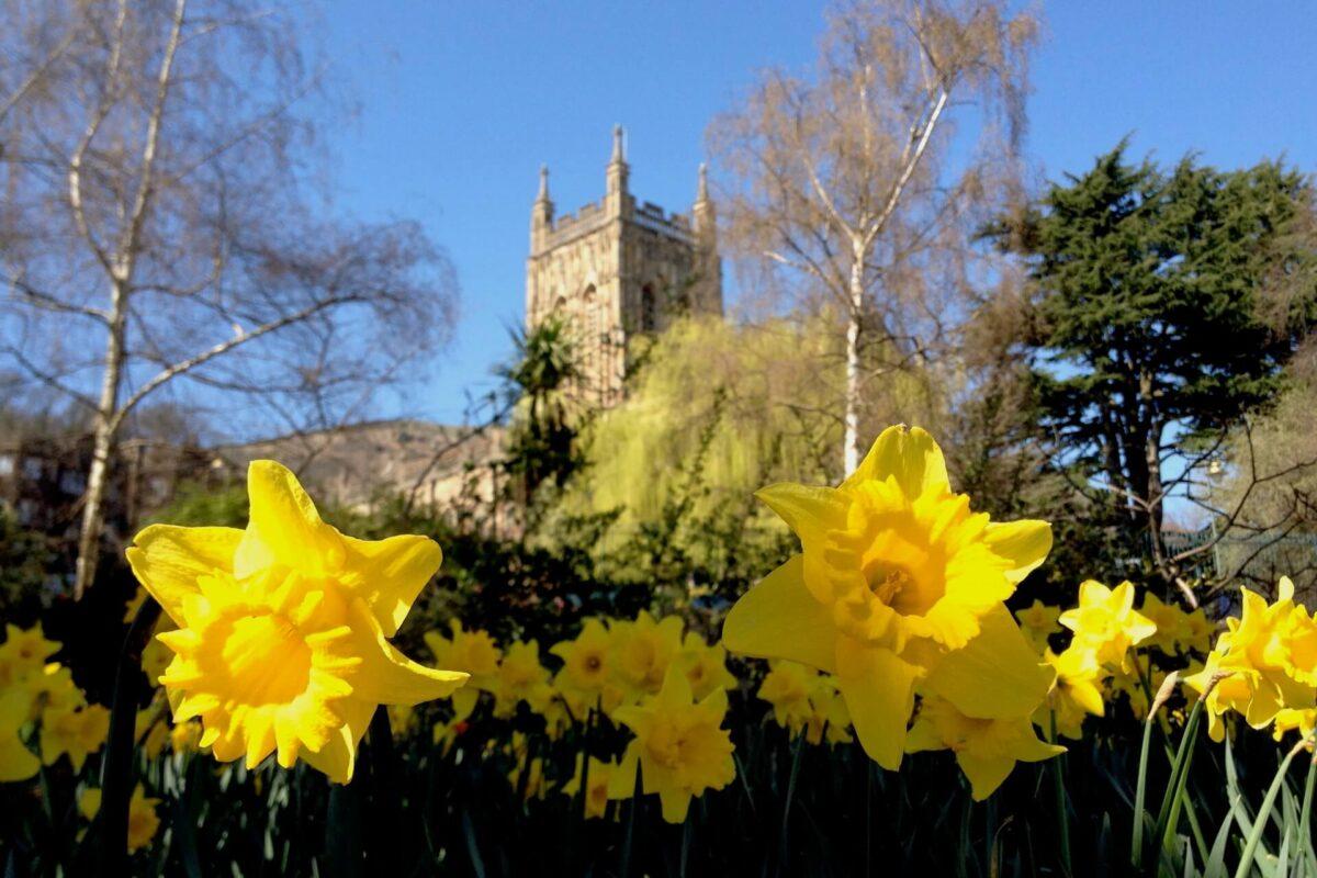 Spring in Priory Park