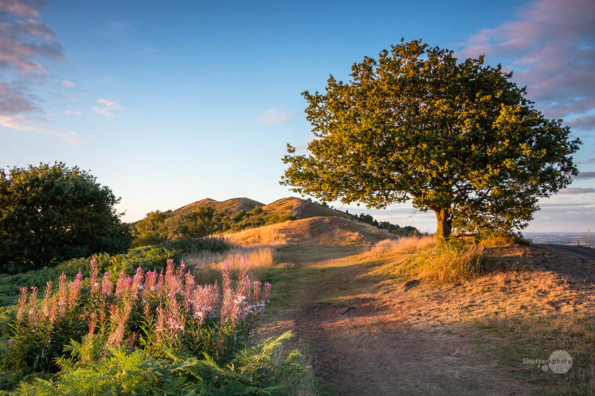 Sunset over the Malvern Hills and the lone tree near Black Hill