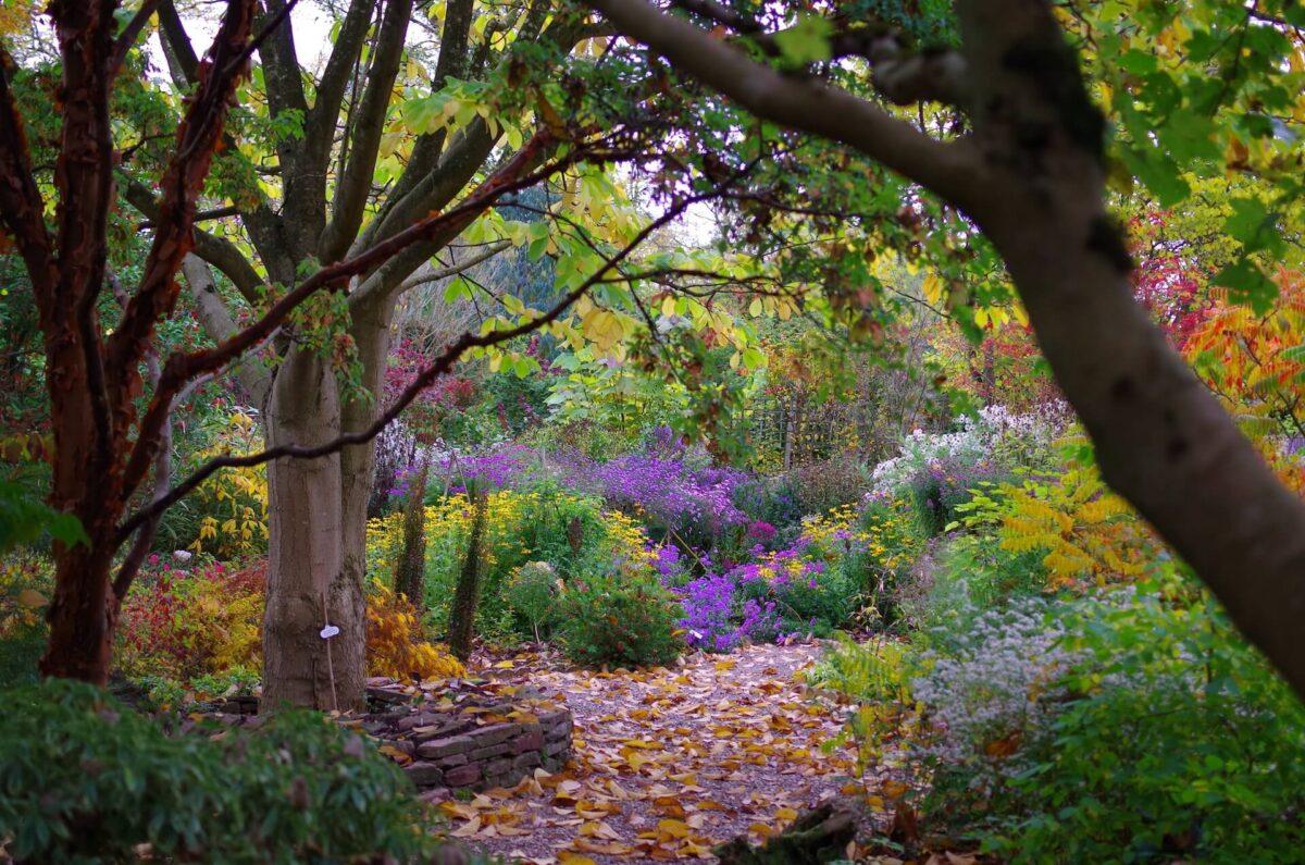 The Picton Garden Old Court Nurseries 3