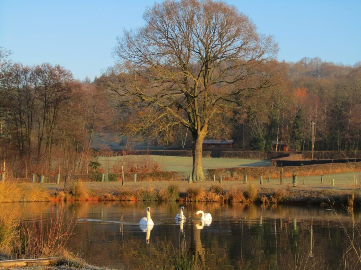 Woodside Lodges Country Park 5